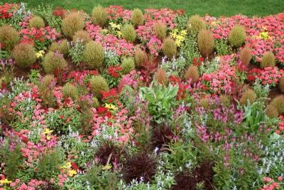 大花壇の寄せ植えb_1