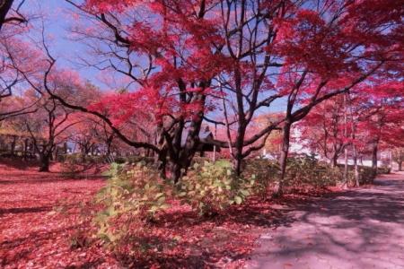 春日公園憩いの広場紅葉b_1
