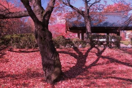 春日公園憩いの広場紅葉d_1