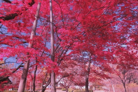 春日公園憩いの広場紅葉c_1