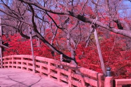 桜雲橋a_1