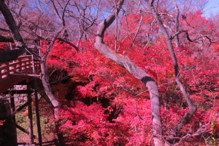 桜雲橋d_1