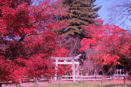 新城藤原神社と紅葉a_1
