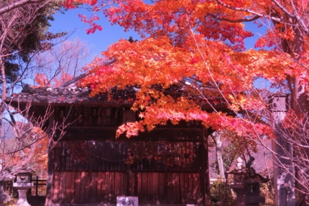 新城藤原神社と紅葉c_1