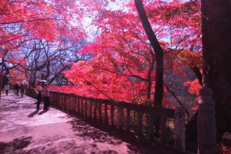 白兎橋b_1