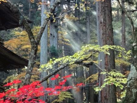 杉並木3_1