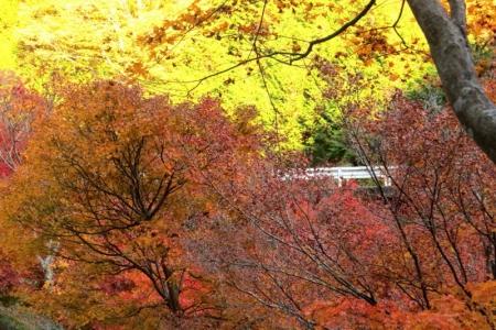 モミジ湖沿いの道にてd_1