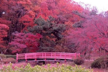 大池公園紅葉a_1