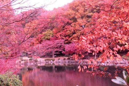 大池公園紅葉eb_1