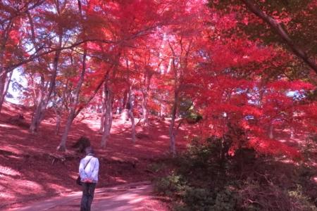 もみじ林の中を歩くf_1