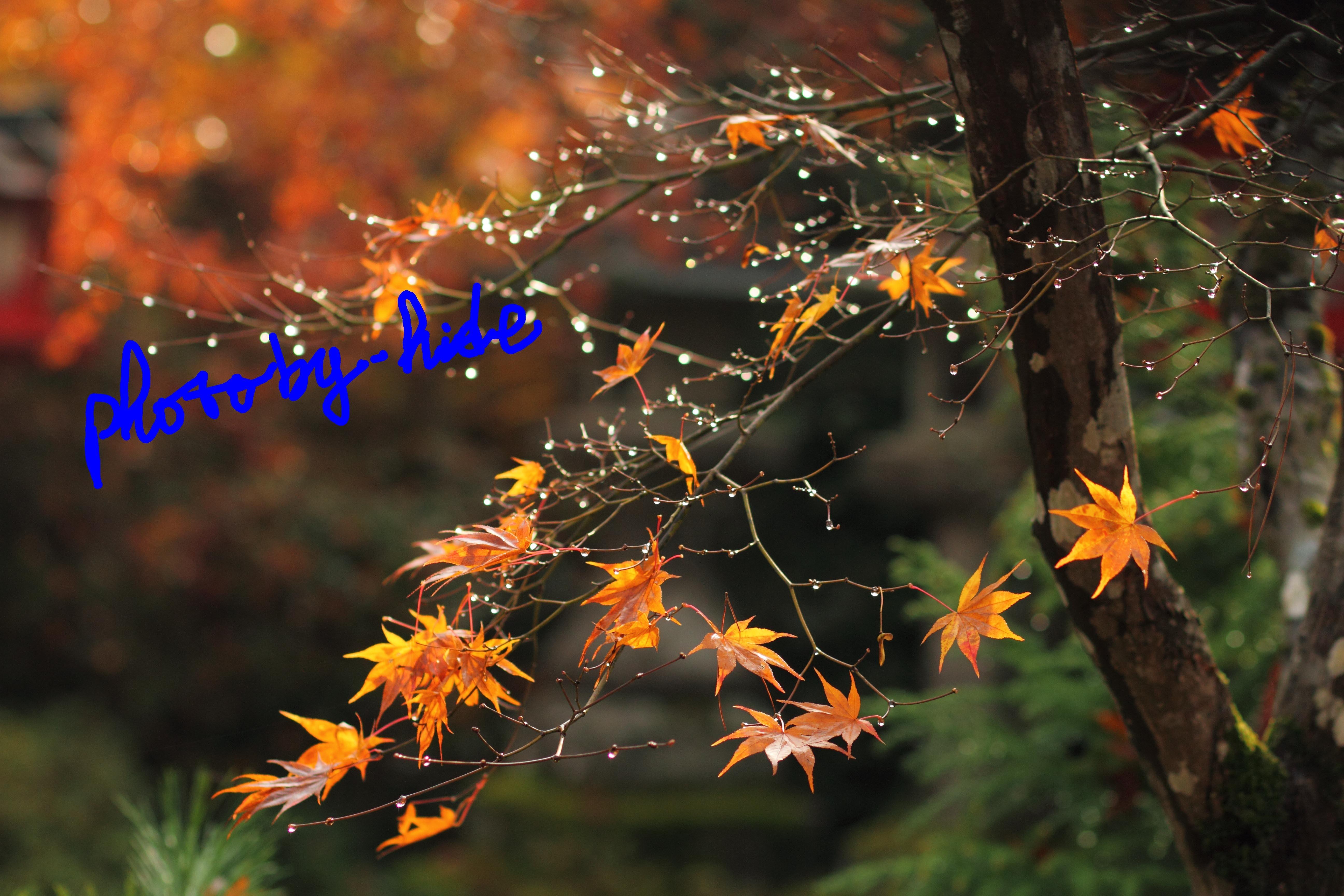 鍬山神社6