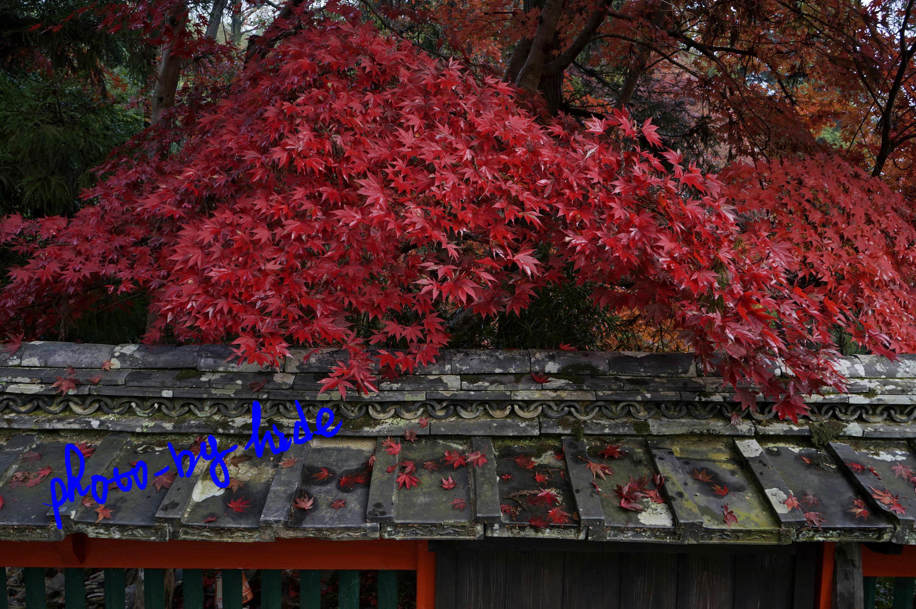 鍬山神社10