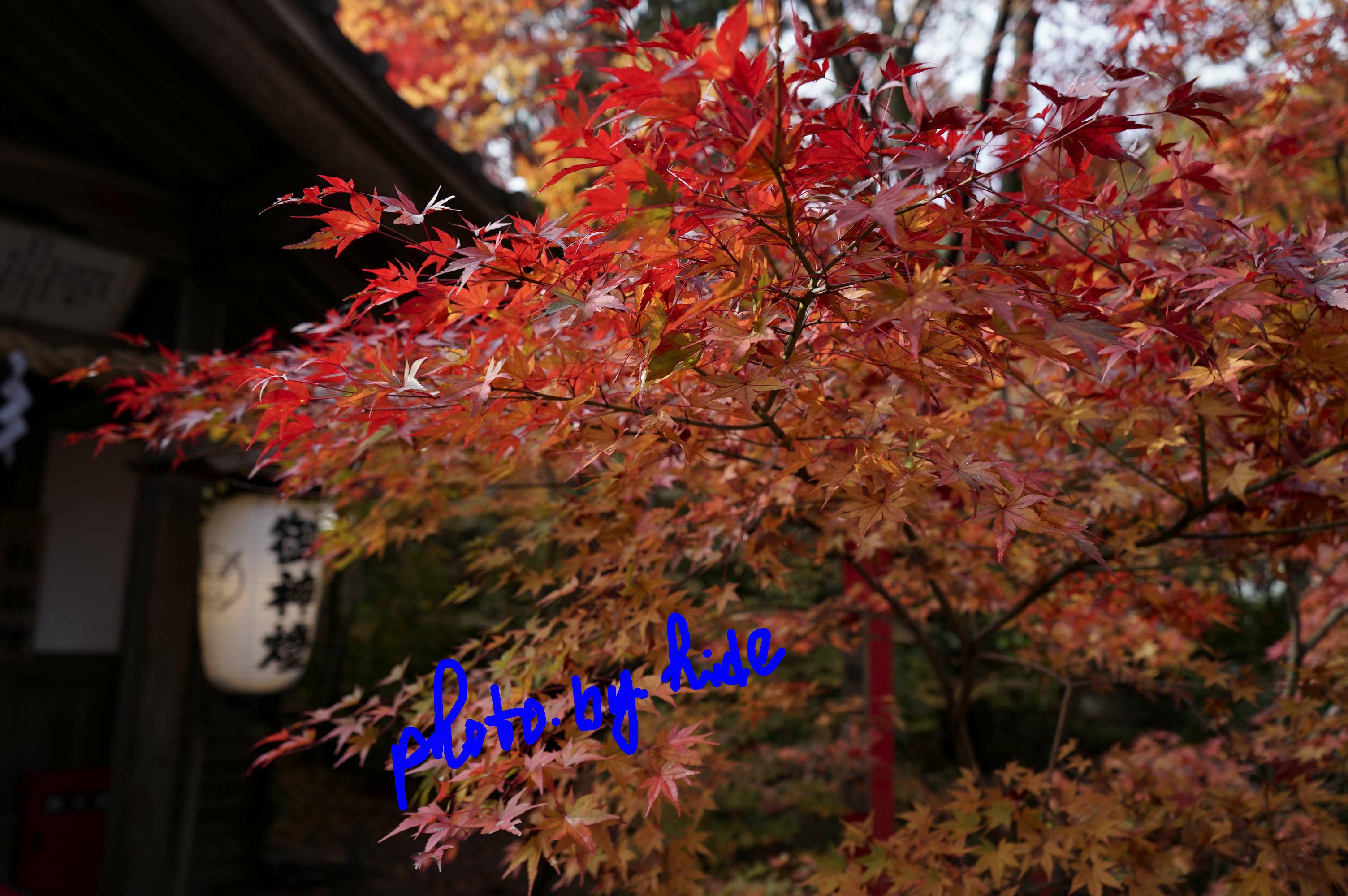 鍬山神社11