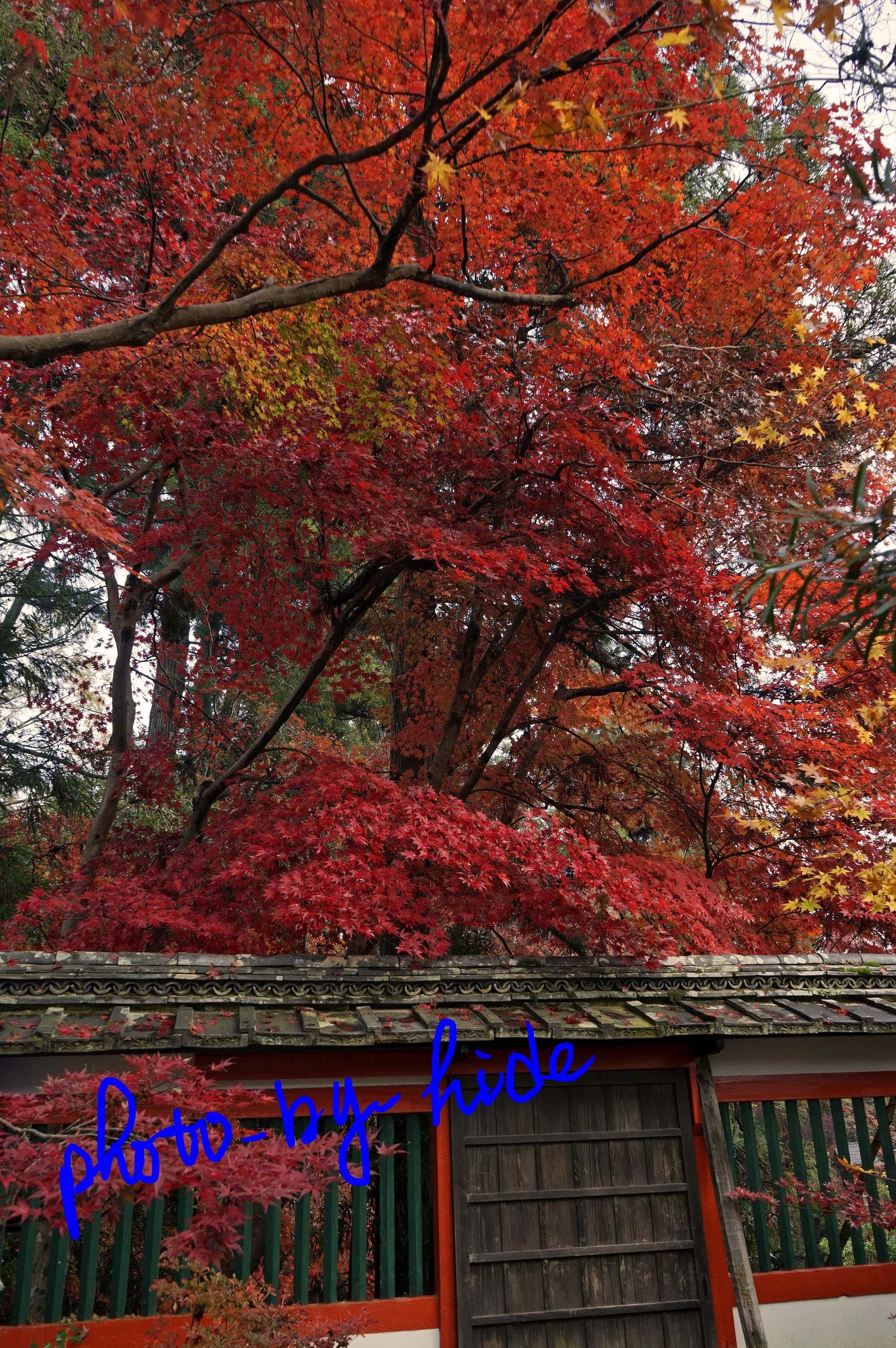 鍬山神社19