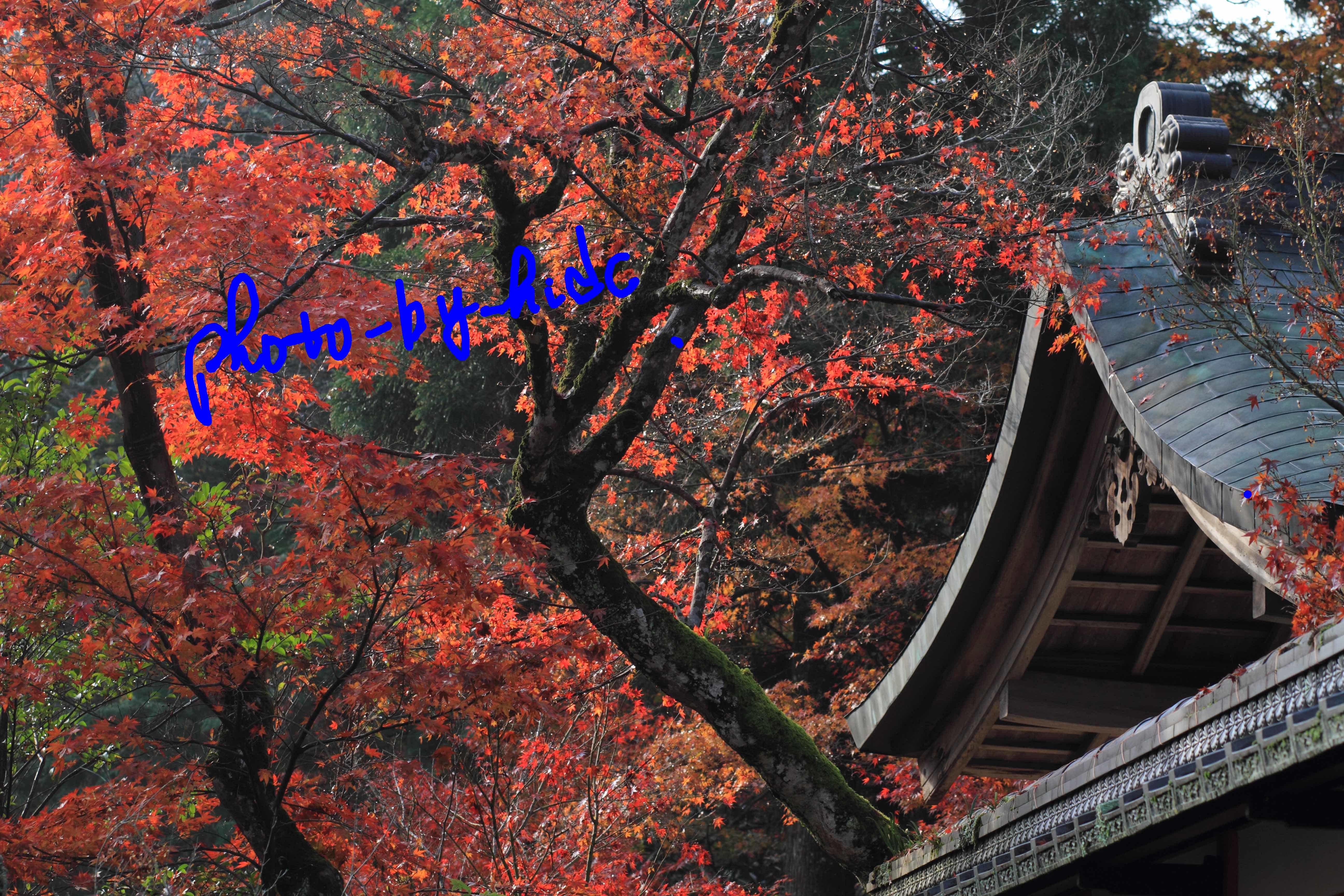 鍬山神社7