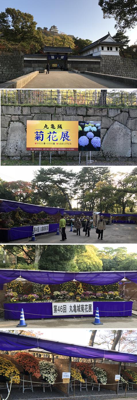 20171110菊花展