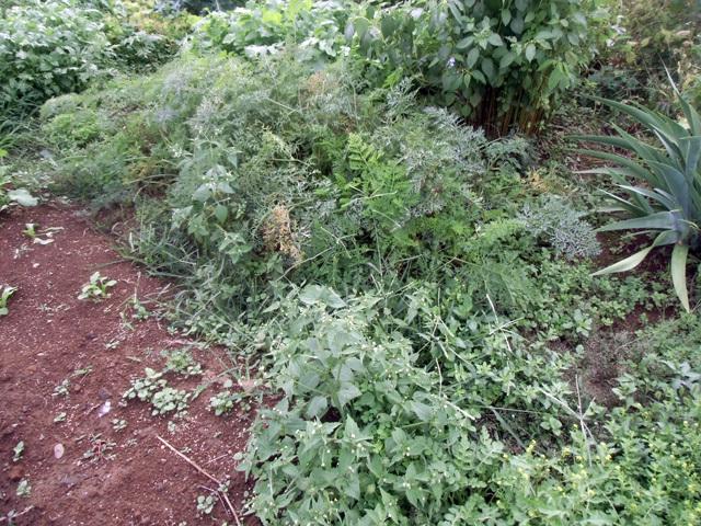 二週間で草ぼうぼう