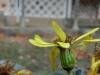 平成29年11月お花