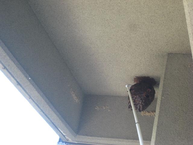 巣までの距離があるため特殊な道具を使用しての駆除中の写真です。