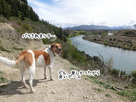 01102017_dog2.jpg