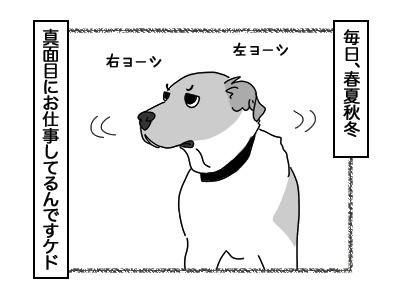 01122017_dog3mini.jpg
