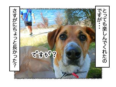 03102017_dog2mini.jpg