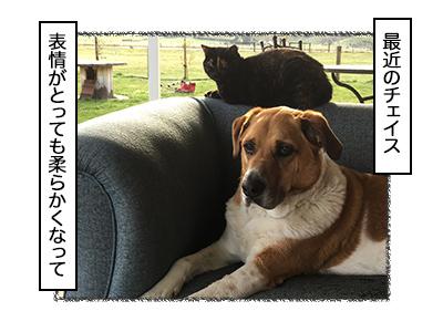 06102017_dog1mini.jpg