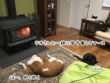 07102017_dog6.jpg