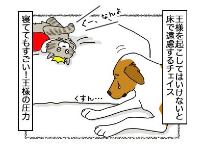 07112017_dog4mini.jpg