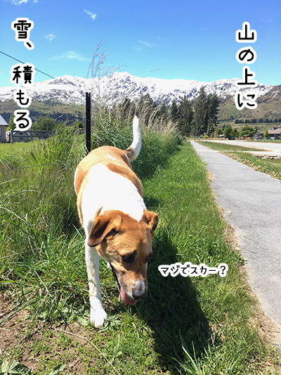 08112017_dog2.jpg
