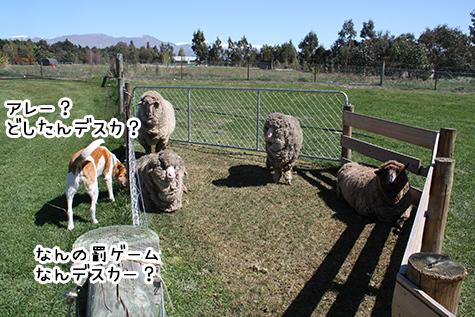 13102017_dog1.jpg