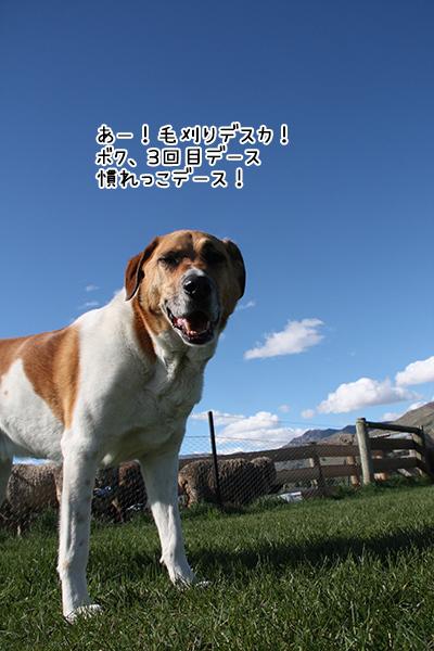13102017_dog4.jpg