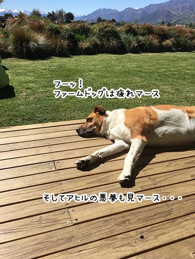 13102017_dog6.jpg