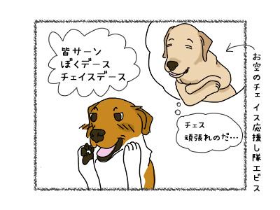 14112017_dog1mini.jpg