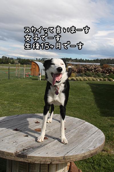 15102017_dog1.jpg
