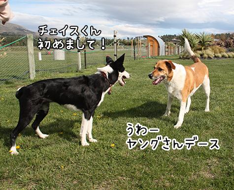 15102017_dog2.jpg
