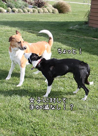 15102017_dog4.jpg