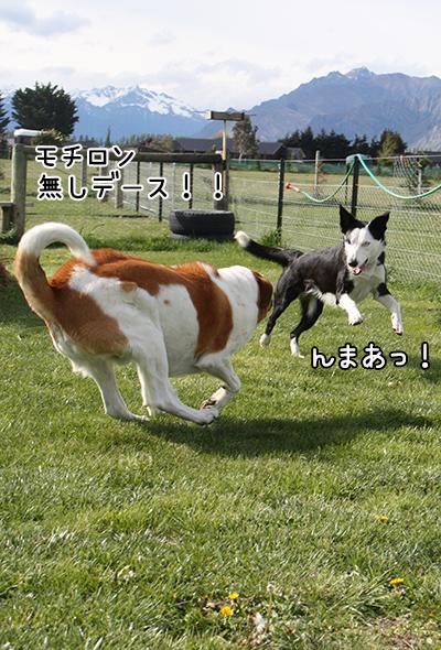 15102017_dog5.jpg