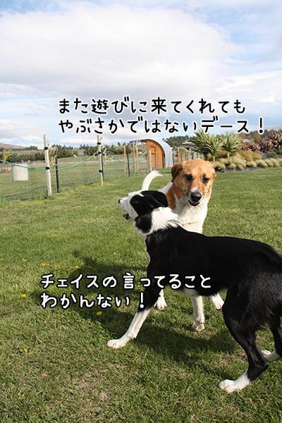 15102017_dog6.jpg