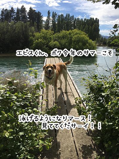 18122017_dog4.jpg