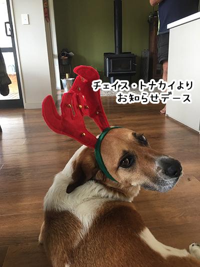 20122017_dog4.jpg