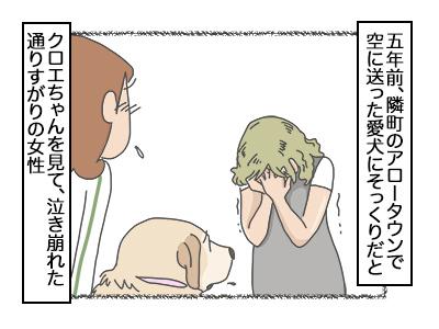 21112017_dog3mini.jpg