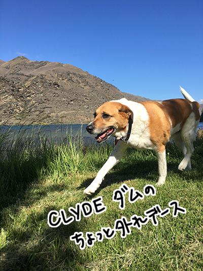 22112017_dog1.jpg