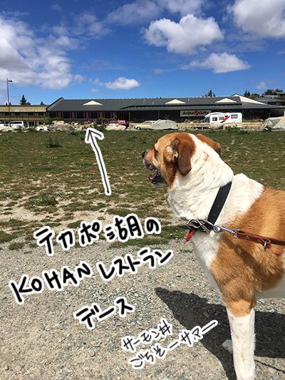 22112017_dog4.jpg