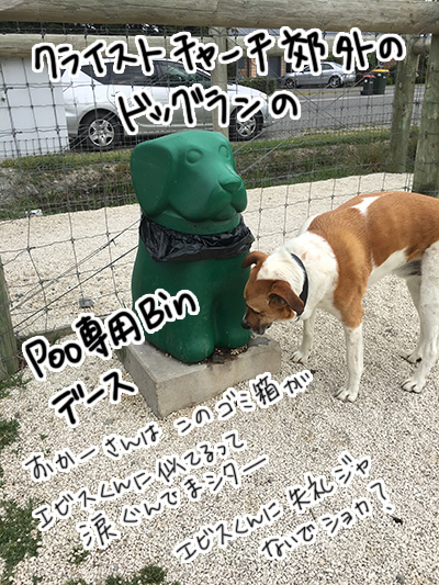 22112017_dog6.jpg