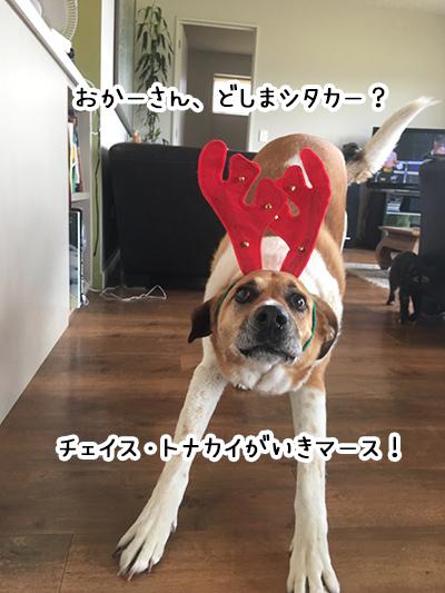 22122017_dog4.jpg