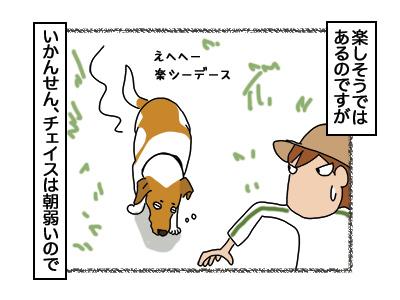 24112017_dog3mini.jpg