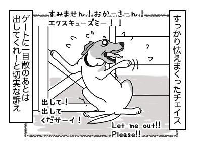 27112017_dog4mini.jpg