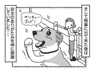 27112017_dog5mini.jpg