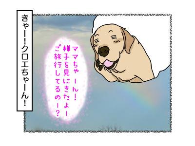 31102017_dog1.jpg